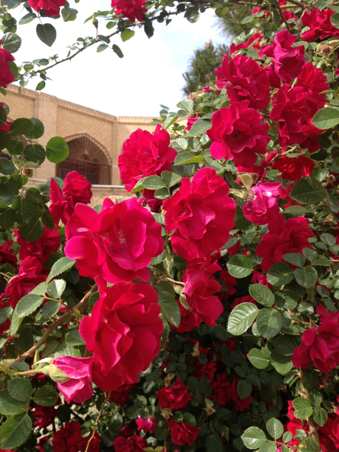 bazaar kerman roses