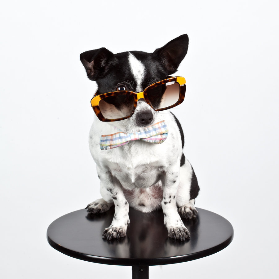 Bex Spex Chick-a-Dee Dog Eyewear
